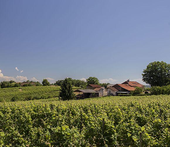 Gite vigneron à Maumusson (Gers 32)